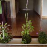 苔玉作りワークショップ ~苔玉と過ごす1年~