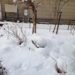 本当にすごい雪ですね!!