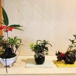 12/3(日)こけ玉作りワークショップ~冬飾り~