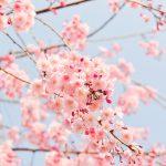 🌸春の入会キャンペーン🌸